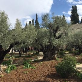 Gethsemane 3