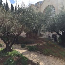 Gethsemane 6